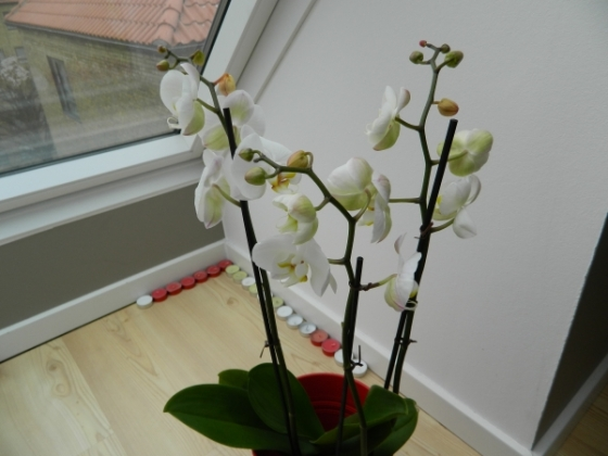planta-orquideas-regalo-de-mi-novio