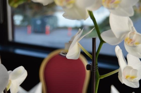 pinza-del-pelo-pillando-flores-orquideas